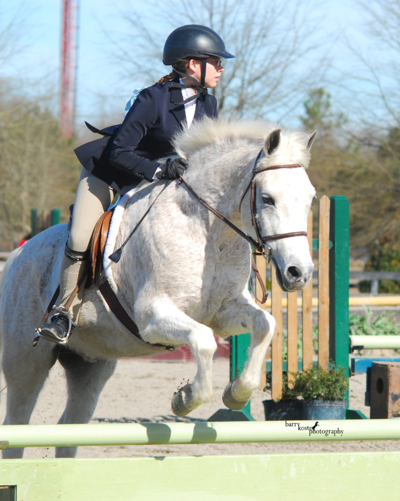 Alfie_Horse Show Leases