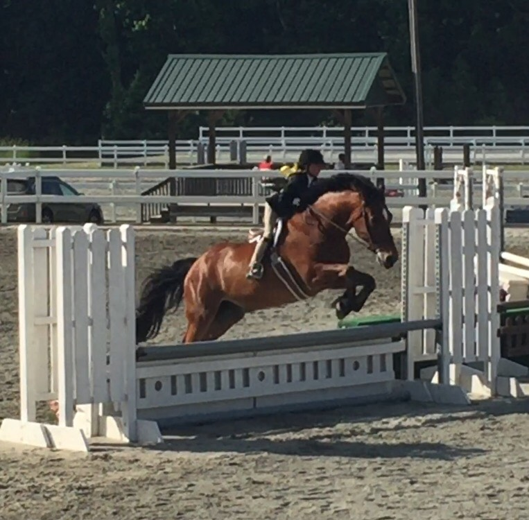 Travler (Bud) Horse Show Leases