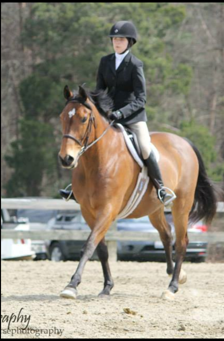 Hunter Jumper for lease by Horse show leases