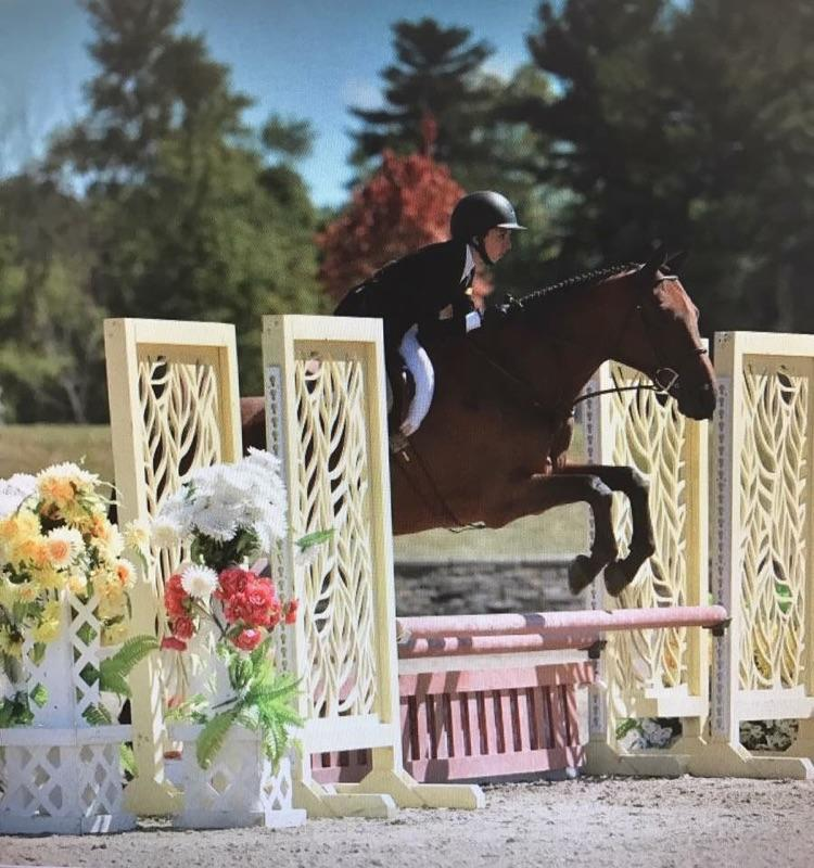 Cora is a hunter jumper for lease