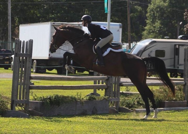 Equitation, Hunter Jumper, Conquistador for lease