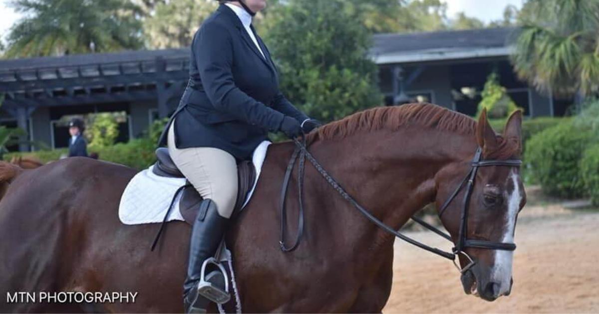 Horseback Riding Charlotte Charlotte Horseback Riding